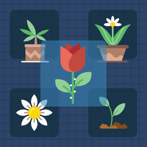 5种花分类