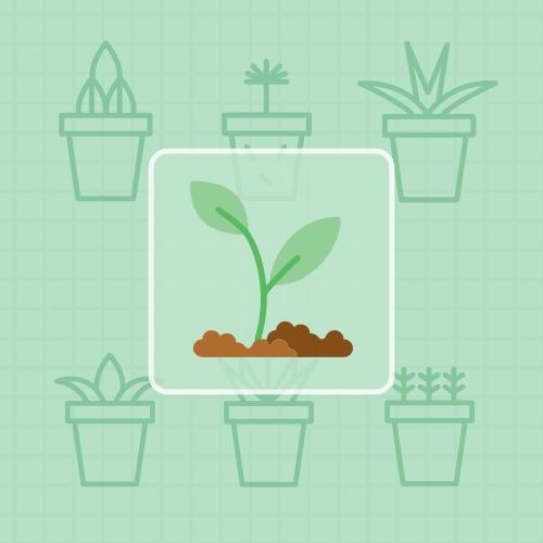 植物幼苗分类